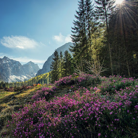 Purple Flowers in the mountains by Aleš Krivec - Instagram & Mobile iPhone ( clouds, purple, grass, green, sun coming through wildflowers, forest, spring, sun, mountains, spring colorful flowers, sky, blue, sunset, cloud, trees, flowers )