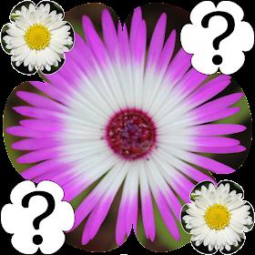 Цветы Игра память 2015