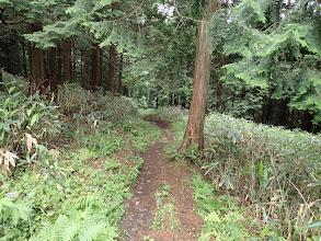 次第に広い道となる(最後は林道?)