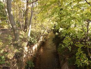 Photo: 伐採地に隣接する玉川上水の遊歩道。