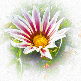 Flower by Dawn Hoehn Hagler - Digital Art Things ( pima county cooperative extension gardens, digital art, garden, oil paint, flower, photoshop,  )
