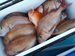 """Photo: 釣果です! """"はまさん""""のクーラーBOXです。真鯛24匹! 大漁でした!"""