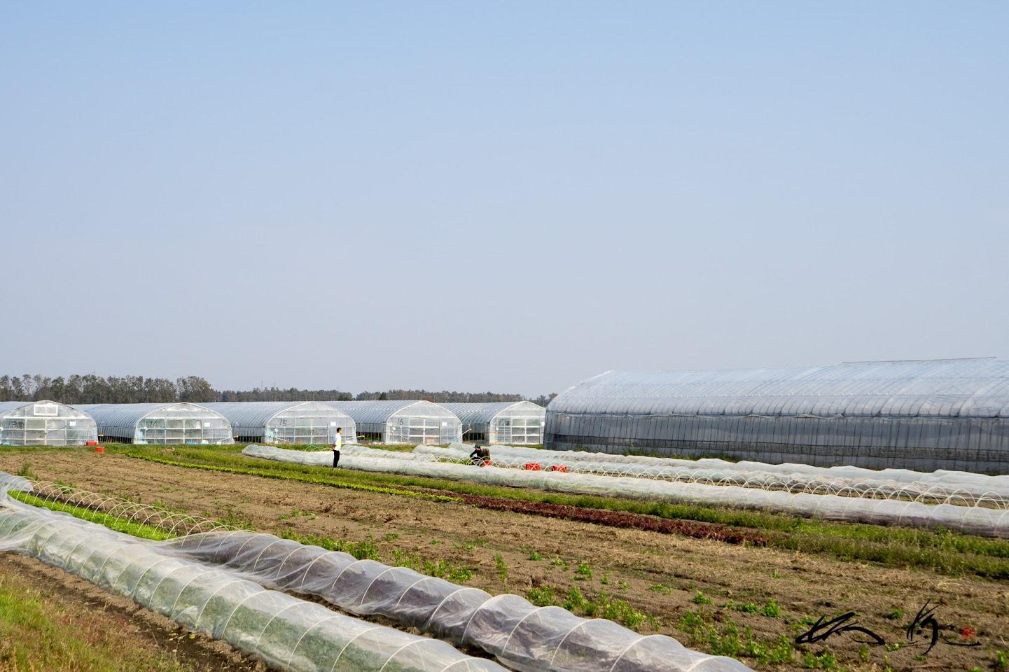 有機栽培のハウス&圃場