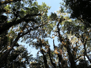 Photo: The canopy on a sunny morning - enjoy it while it lasts (usually only an hour or two before the clouds move in)