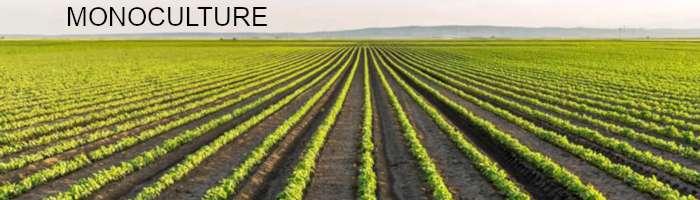 Monoculture Farm