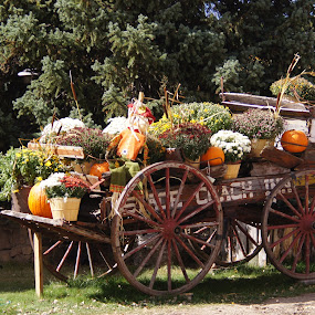 Wagon of Plenty by Amber O'Hara - Artistic Objects Still Life ( coach, wagon wheel, pumpkins, plants, wagon, autumn colors, flowers,  )