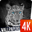 Animals Wallpapers 4k icon