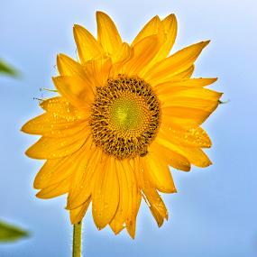 by Teresa Wooles - Flowers Single Flower (  )