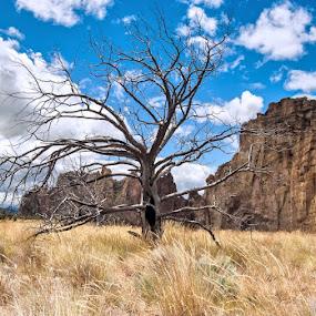 Near Smith Rock by Bill Wagner - Uncategorized All Uncategorized ( tree, state park, smith rock, oregn, landscape )