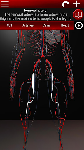 Circulatory System in 3D (Anatomy) 1.58 screenshots 4