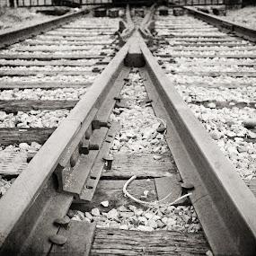 Train Tracks by Kristi Parker - Transportation Trains