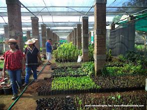Photo: Shade house.. Plant Nursery