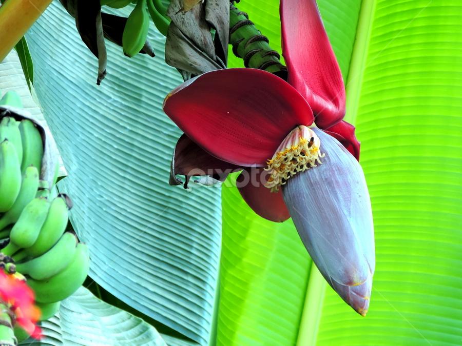 Bursting open by Elfie Back - Nature Up Close Gardens & Produce (  )