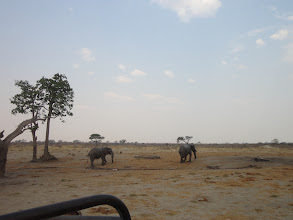 Photo: Elephants on a quest to find water
