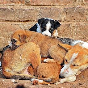 Street Dogs with Children by Suman Rakshit - Animals - Dogs Portraits