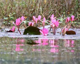 Photo: Day 233 - More Beautiful Lillies (Vietnam)