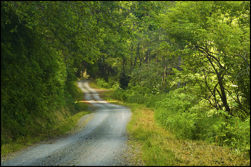 Photo: Rural dirt road through green trees and forest along the Coastal Drive, Redwood National Park, California  A little sumptin' green fer 'd St. Patrick's Day. I married Irish, I drink Irish - Stout, and I can speak a fair bit o' Irish, too.