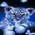 Tiger Butterfly LWP icon