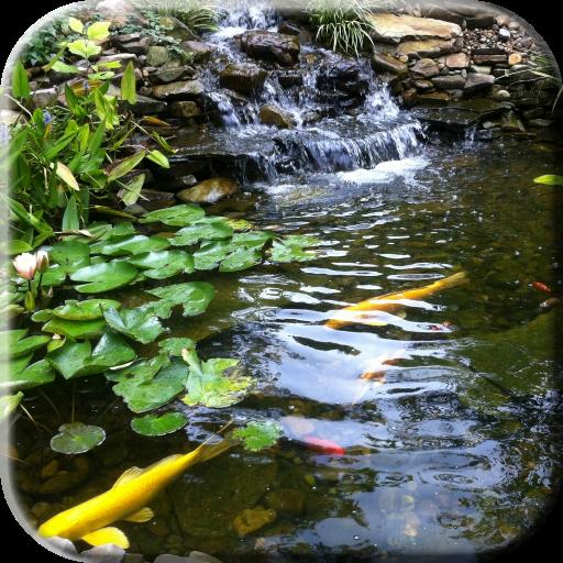 Pond with Koi Live Wallpaper