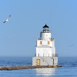 Manitowoc Breakwater Lighthouse by Dawn Hoehn Hagler - Buildings & Architecture Public & Historical ( wisconsin, lake michigan, seagulls, lighthouse, manitowoc lighthouse, manitowoc, manitowoc breakwater lighthouse, birds,  )