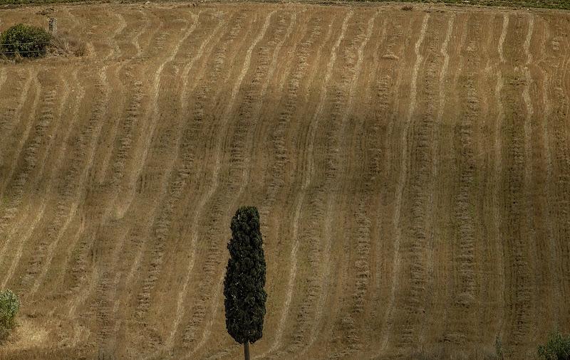 campo di grano di tano53
