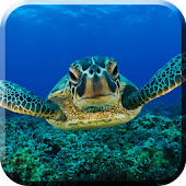 Green Turtle Live Wallpaper
