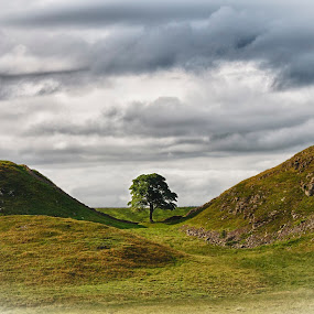 Sycamore Gap by Griff Johnson - Landscapes Mountains & Hills ( hills, sky, pwclandmarks, tree, vignette, hadrian's wall, renewal, green, trees, forests, nature, natural, scenic, relaxing, meditation, the mood factory, mood, emotions, jade, revive, inspirational, earthly,  )