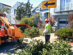 Photo: Worker placing branches into shredder; the branch was completely gone a second later. PG&E workers, responding quickly to a power outage caused by a fallen eucalyptus tree nearby, extended their repair work to the area next to the oak close to the top of the Hidden Garden Steps site (16th Avenue, between Kirkham and Lawton streets in San Francisco's Inner Sunset District) on October 4, 2013. Trimming the oak to prevent further outages was part of the work completed by mid-afternoon on this site where the 148-step ceramic-tile mosaic designed and created by artists Aileen Barr and Colette Crutcher will be installed. For more information about this volunteer-driven community-based project supported by the San Francisco Parks Alliance, the San Francisco Department of Public Works Street Parks Program, and hundreds of individual donors, please visit our website at http://hiddengardensteps.org.