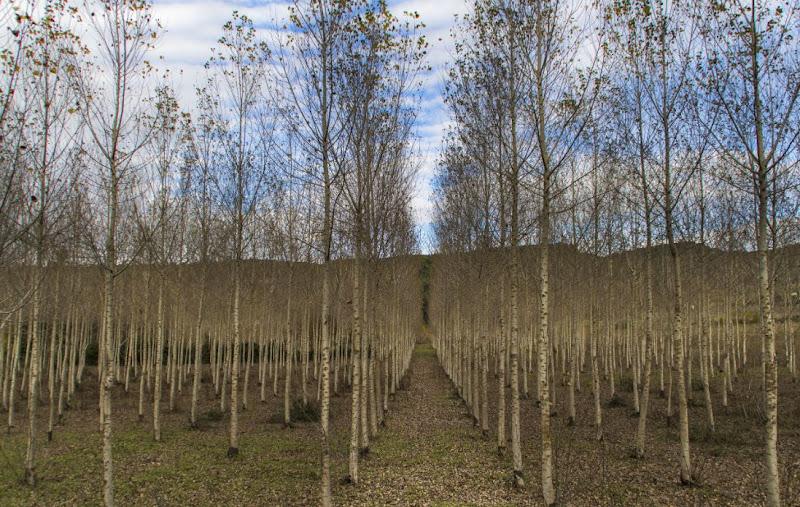 Halley Trees di cristiandragophoto