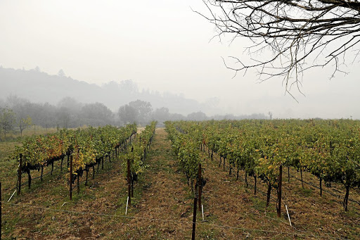 Smoke from wildfires hangs over vineyards in California's Sonoma Valley on October 10 2017. Picture: REUTERS