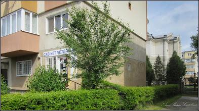 "Photo: 2016.05.09 - de pe Calea Victoriei, zona ""Cabinet Veterinar"""