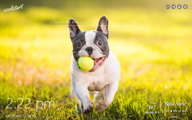French Bulldog HD Wallappers Dogs and Puppies
