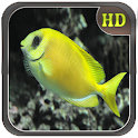 Fish HD Wallpapers icon