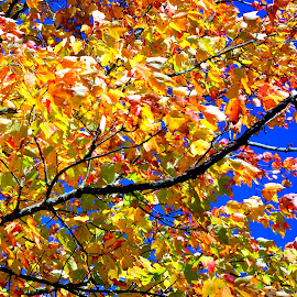 Fall on Sky by Martin Stepalavich - Nature Up Close Trees & Bushes