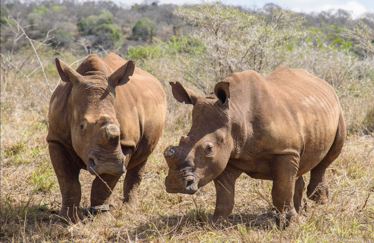 iMpilo and Makhosi have been returned to the wild.