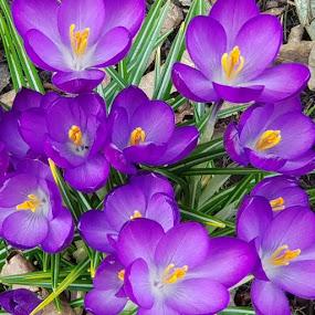 by Su San - Flowers Flower Gardens