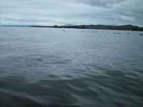 Photo: Sea birds