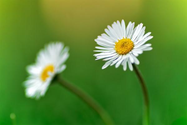 Per me...Il simbolo della primavera... di Roberto Peruzzi