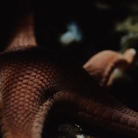sea star by Valentina Cantera - Animals Sea Creatures ( star, natural, nature, sea star, water, sea )