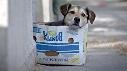 La historia de un perrito - Gloria Fuertes