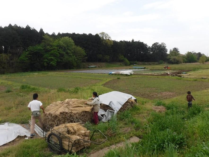 2017年12月につくった「わらぼっち」、防水用の銀シートがしっかりかかっていたところは乾燥していました。屋外で稲わらを保管できるのはありがたいです。