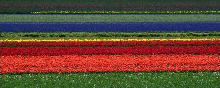 Geometrie olandesi di anyram