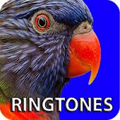 Birds Ringtones