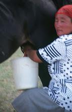 Photo: 03380 ブルド/ハスバター家/馬の乳搾り