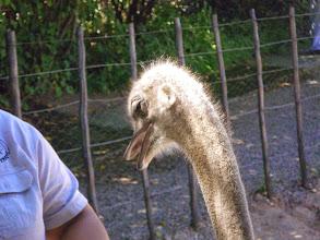 Photo: Ostrich Farm