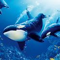The Killer Whale icon