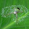 Green ZigZag Spider