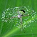 Green ZigZag Spider