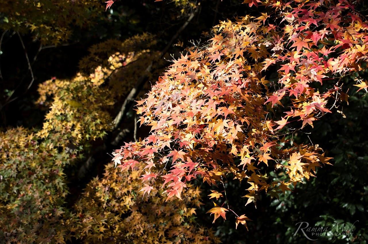 遲來的賞楓分享-日本京都東福寺