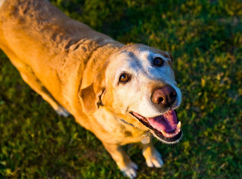 old-dog-1582205_960_720.jpg